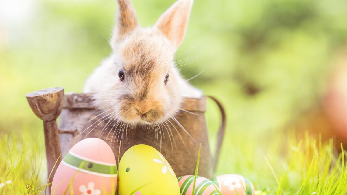 Konijn Pasen